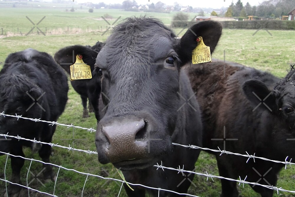 Here's Looking At Moo, Kid by Barrie Woodward