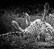 """""""Roll it - Stretch it"""" (B&W) - (Photo 3/3 of the Series """"Dinner"""") by Andreas Koerner"""