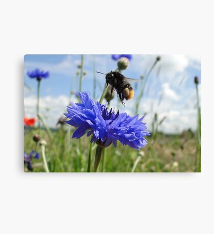 Flight Bee Incoming Canvas Print