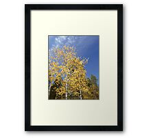 Bright Aspens in Jemez Mountains Framed Print