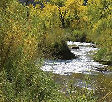 Jemez Creek In the Fall  by MStrause