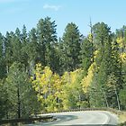 Fall Colors In Jemez Mountains by MStrause