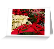 Christmas Poinsettia, ne1189 Greeting Card