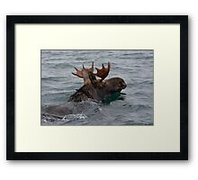 swimming moose Framed Print