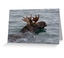 swimming moose Greeting Card