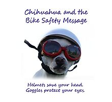 Chihuahua and the Bike Safety Message Tee and Sticker Photographic Print