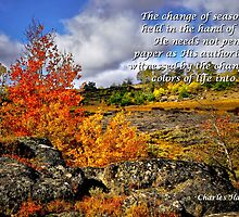 Card #443 Steens Fall Colors by Charles & Patricia   Harkins ~ Picture Oregon