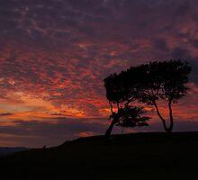 Three Sisters, Cleeve Hill by Rebsie Fairholm