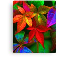 Multi coloured leaves Canvas Print