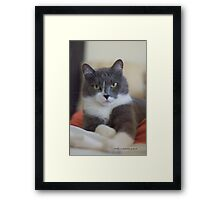 PEACEFUL SULLY © Vicki Ferrari Framed Print