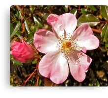 Still Blooming Canvas Print