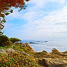 Point Lobos State Park, California by RoySorenson