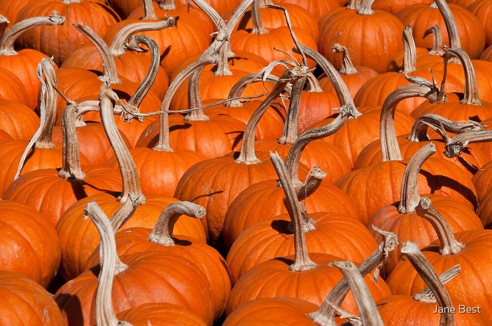Pumpkins by Jane Best