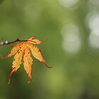 Autumn Dawns by Tracy Friesen