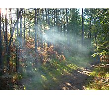 Pine Bush Photographic Print