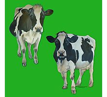 Two Cows on Green Photographic Print
