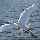White Egret by Keith Smith