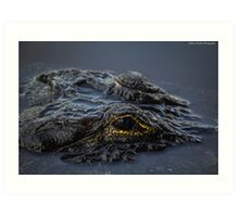 Eye of The Gator Art Print