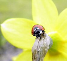 Ladybird by Paul Leslie