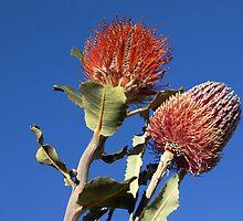 Aussie Double by theaussie