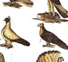 Old school pigeon print T-SHIRT Sticker
