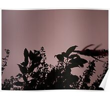 shadowy leaves Poster