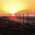 Good Morning Sunshine- dedicated to myself by Brenda Dahl