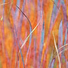 Living colors by Anne Staub