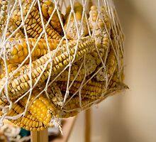 Dry Corns by Kuzeytac