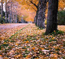 autumn in the city by JorunnSjofn Gudlaugsdottir