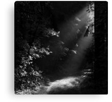 The Light at the End of the Forest Canvas Print