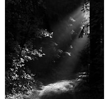 The Light at the End of the Forest Photographic Print