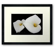 classic calla lilies Framed Print