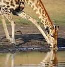 Drinking deeply by Explorations Africa Dan MacKenzie
