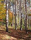 Walking in the Woods, Dunrobin Ontario by Debbie Pinard