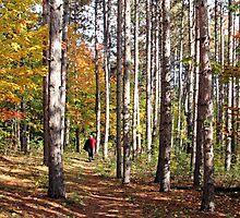 Walking in the Woods, Dunrobin Ontario by Debbie Pinard