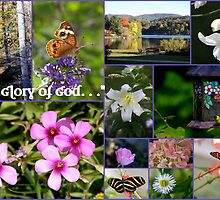 The Glory of God by Paula Tohline  Calhoun