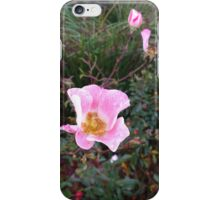 Dewy Wild Rose Blooms and Buds iPhone Case/Skin