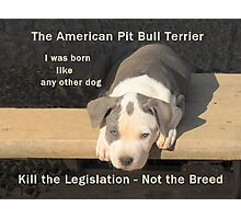 Unfair Breed Specific Legislation Photographic Print
