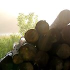 WOODPILE IN THE MORNING SUN by katemmo