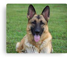 Beautiful Sable German Shepherd Canvas Print