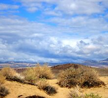 Desert In The Sierras? by marilyn diaz