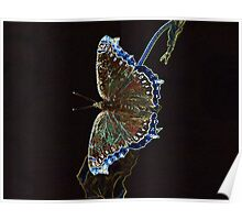 Glowing Butterfly Poster