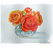 Ranunculus Flowers Poster