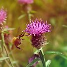 Hovering Bee, Scotland 2009 by Olivia McNeilis