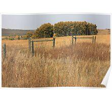 Prairie Poplar grove Poster