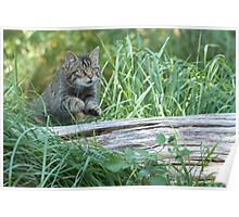 The cat jumps over the log Poster