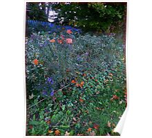 Red Maples Leaves on Deep Purple Asters Poster