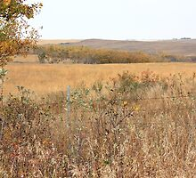 Alberta Prairie Farmland in Autumn by Jim Sauchyn