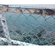 Rusted Wet Railing by the Ocean Photographic Print